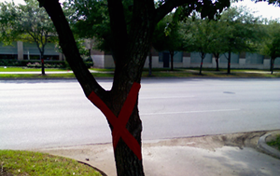 picture of a tree sentenced to death with red x