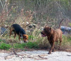 image of abandoned dogs