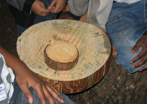 image of counting tree rings