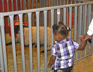 little girl looking at a lamb