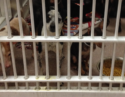 150216_spca-small-dogs400px-tn.png