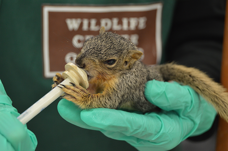 squirrel-spca-photo.png
