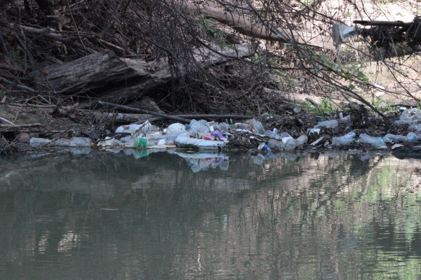 Photo of Trash along shore of Buffalo Bayou