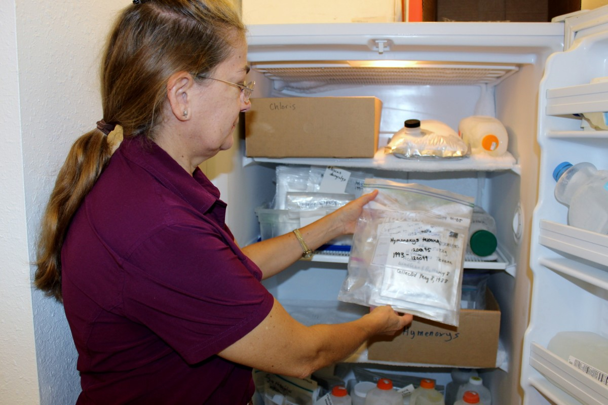 Anita Tiller hold packets of wildflower seeds frozen since 1988 in freezer at Mercer Botanic Gardens in Humble