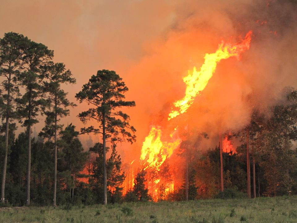 photo of a fire burning in tree scape