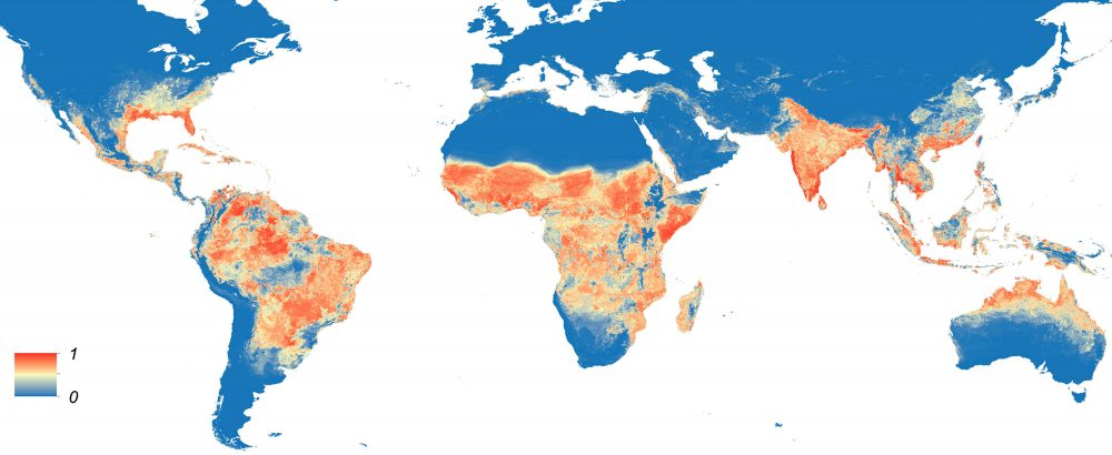 This map shows the predicted distribution of Aedis aegypti, the mosquito that carries Zika virus