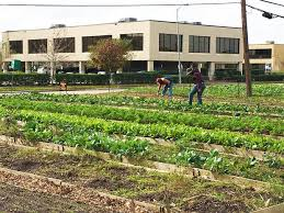 Plant It Forward Farms is a Houston based non-profit that aims to employ refugees through an urban farmer program that teaches refugees how to make a living wage from farming an acre of land.