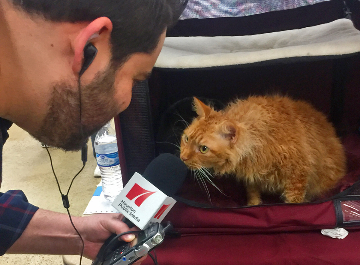 Cat Show Banner - Fred Interview - Melanie Hagerty