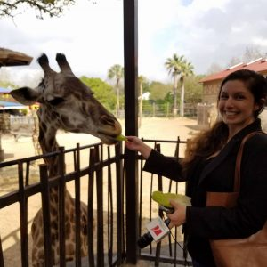 Producer Maggie Martin feeds a giraffe at the Houston Zoo