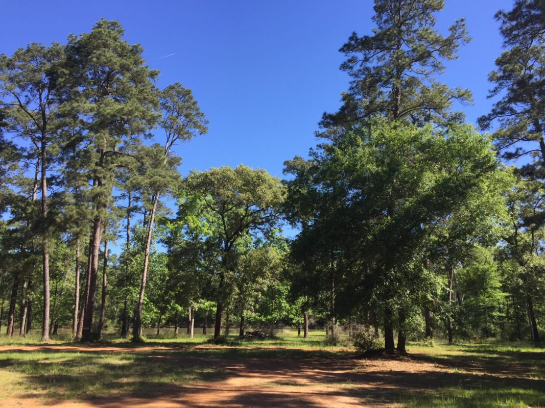 The Present And Future Of The W G Jones State Forest