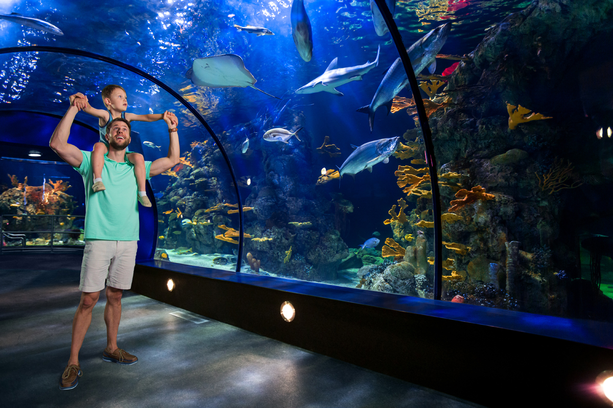 A tour of the renovated aquarium at moody gardens for Fish store austin