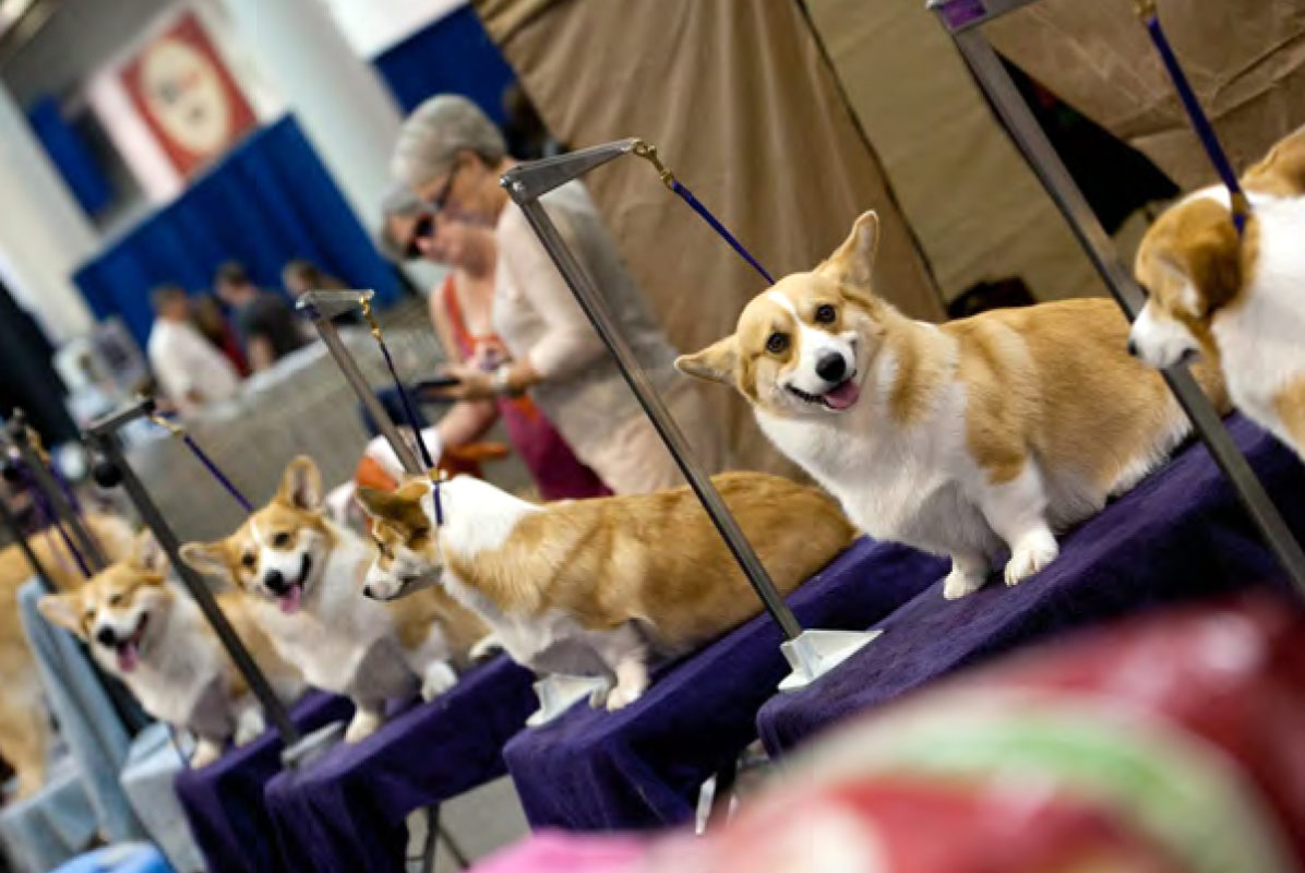show dogs - photo #24