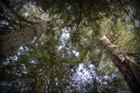 Trees Looking Up