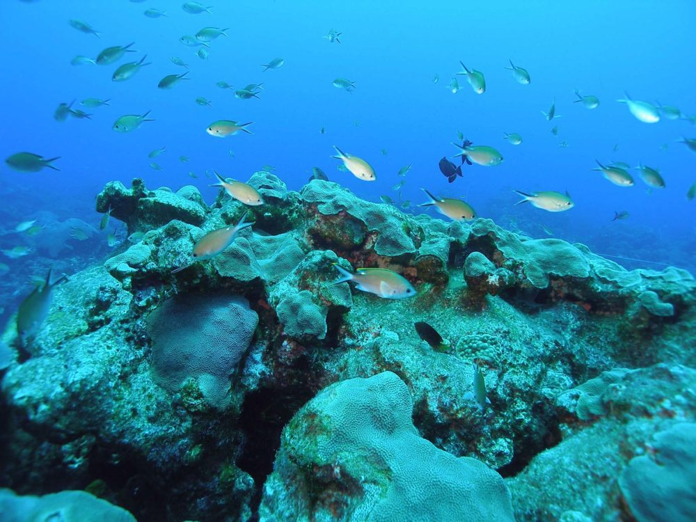 An Underwater Look At The Gulf Of Mexico Houston Public