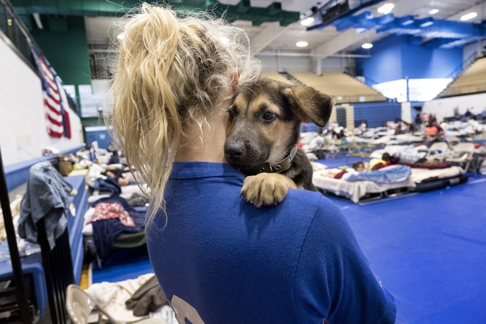 Tesa Rutherford, 21, and her fiancé, Brandon Olivarez, 22 recently moved to Rockport, where they lost everything to Hurricane Harvey. When they went to check on their property, they found a puppy, rescued him and named him Harvey. They took shelter at the Wilhelmina Delco Center emergency hurricane shelter in Austin on Aug. 29.
