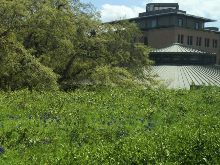 Green Roof at Rice University