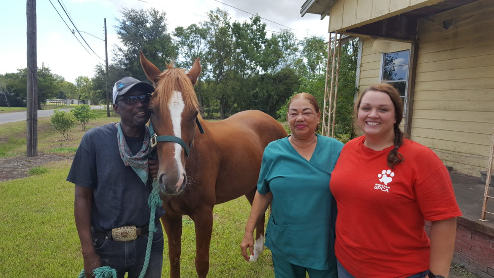 Reuniting Lost Horse - Houston SPCA