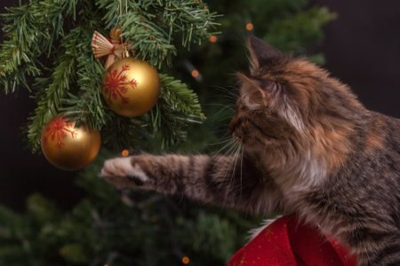 A cat plays with a Christmas tree ornament.