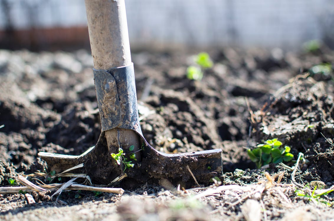 Answers To Your Frigid Weather Gardening Questions115