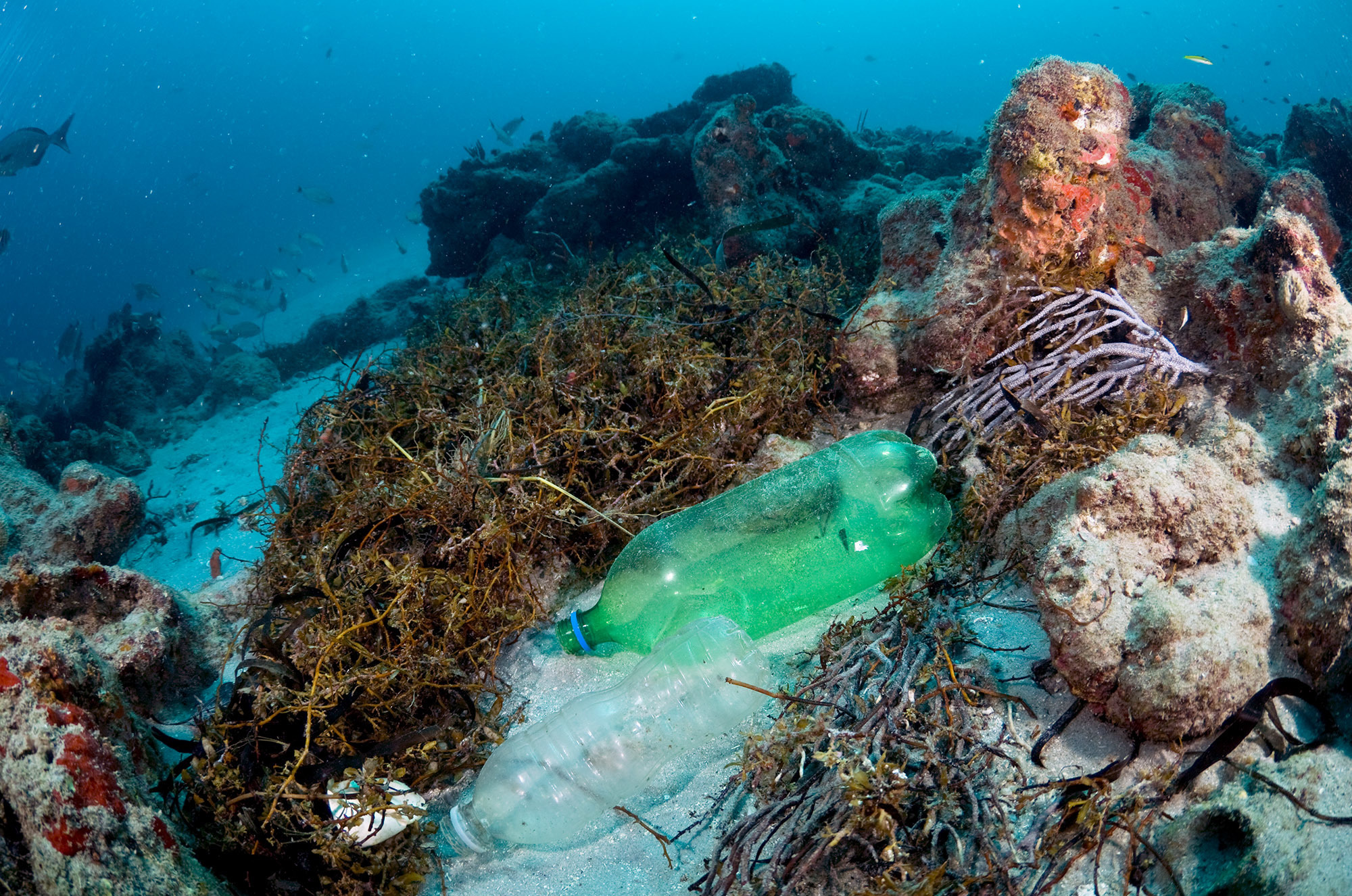 Diapers, cotton swabs, bottles and wrappers are littering reefs. A new study finds they're causing widespread damage.