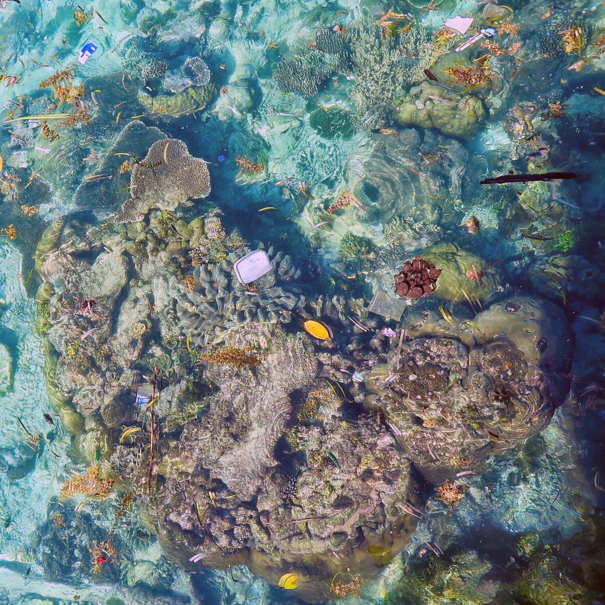 A survey of 150 reefs found plastic was a common pollutan