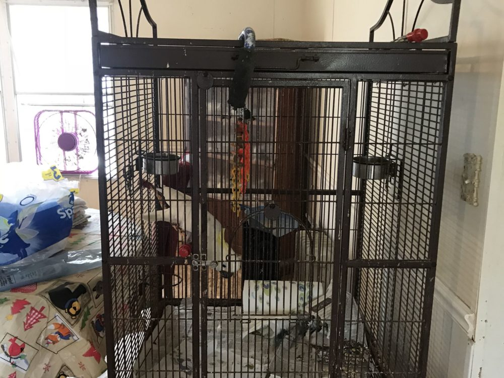 A Magnolia resident has surrendered more than 100 birds to the Houston SPCA reported because of not being able to provide proper living conditions for the animals.