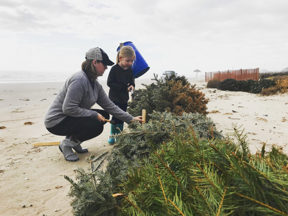 How Your Old Christmas Tree Can Help Protect The Texas Coast – Houston Public Media
