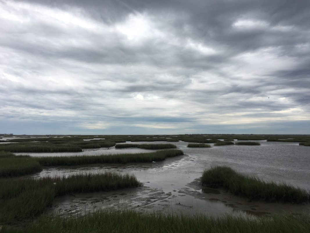 This Houston Nonprofit Is Paying Coastal Landowners To Help Fight Climate Change By Storing CO2 In Their Marshes - Houston Public Media