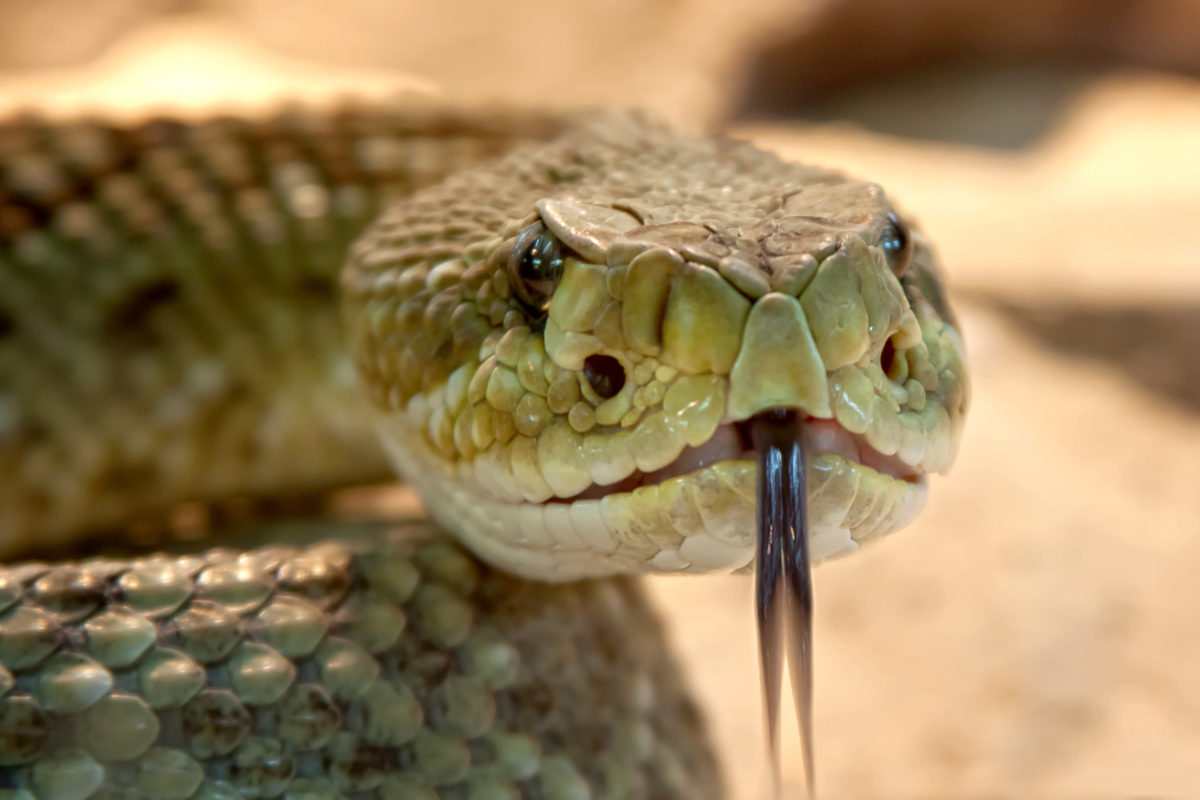 What's The Right Way To Treat A Snake Bite?