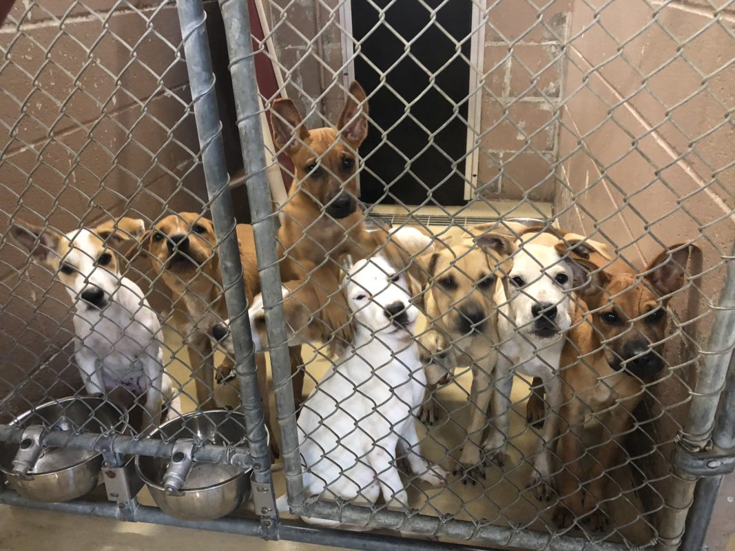 Surge Of Animals Puts Harris County Shelter In Critical
