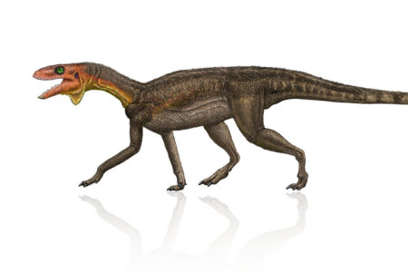 New Dinosaur Species Kwanasaurus williamparkeri