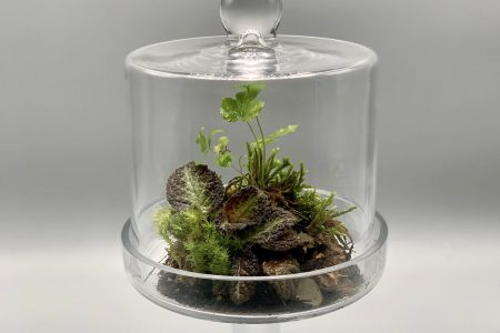 One of Danielle Reed's terrariums